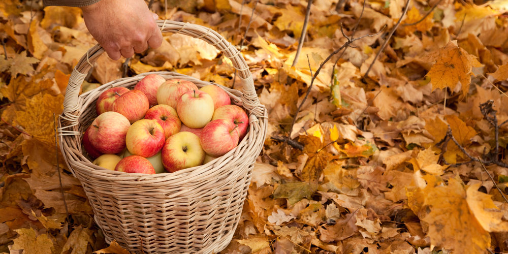 apples in cart on yellow leaves
